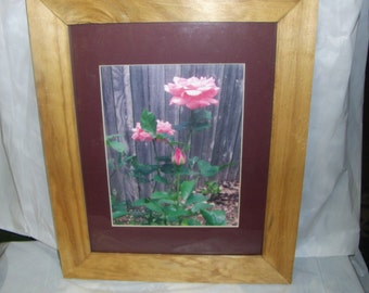 Roses in Ann's garden, framed and matted print