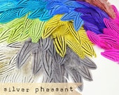 PICK YOUR COLOR - 12 pcs - Silver Pheasant Feathers - select grade, zebra, stripes, exotic feathers -