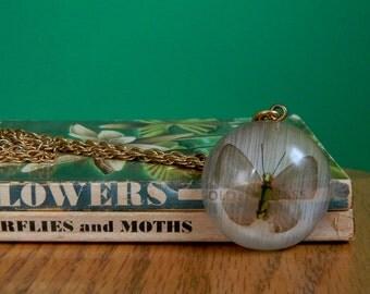 Vintage 1970s Butterfly Specimen Necklace