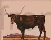 vintage farm animal bull in the field cattle illustration digital download