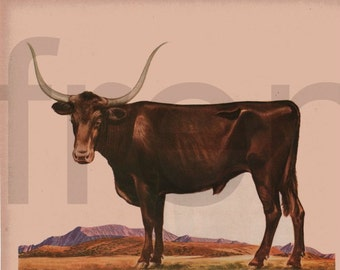 vintage farm animal bull in the field cattle illustration digital download