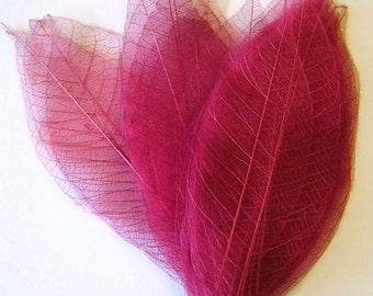 One Dozen Dark Magenta Skeleton Leaves Great for Corsages, Hair Clips, Paper Crafts