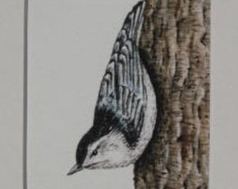 Fine Art Print - Nuthatch -  Bird - Watercolor ACEO with Mat - Artist Signed