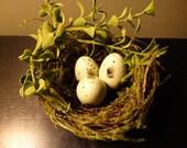Spring Birds nest with eggs
