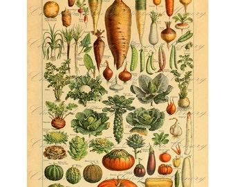 Vintage French Encyclopedia Print SALE!!! - Vegetables - Digital Collage Sheet - Digital Download - INSTANT Download