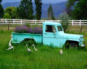 Mint Teal Green purple flowers Old Truck Wild Storks Art Fine Art Home Decor  photograph giclee 8x10
