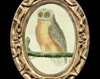 Owl Bird Portrait Miniature Dollhouse Art Picture 6661