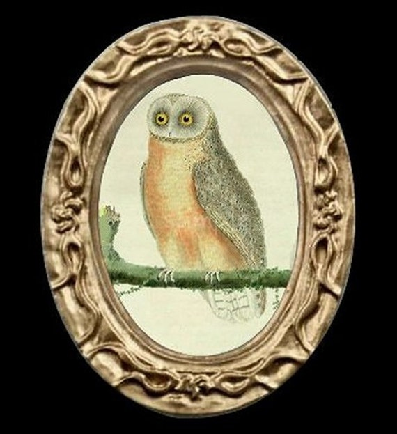 Owl Bird Portrait Miniature Dollhouse Art Picture 6661