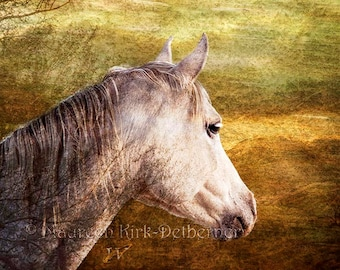 Horse art, Photography, photo, grey, gray horse, white horse, elegant Arabian mare, AZ, earth tones, horse decor, southwestern,  FastWinn