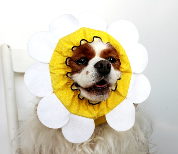 Daisy Flower Dog Snood, Stay-Put 3 Rows Elastic Thread,  Pet Hat, Long ear covering, Specialty Snood