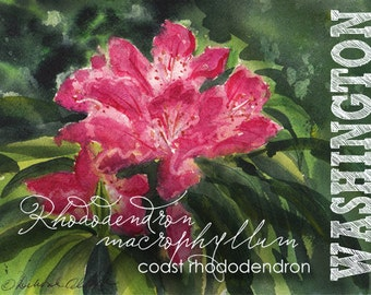 Washington, Watercolor ACEO, State Flowers, Coast Rhododendron, Rhododendron macrophyllum