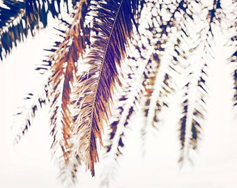 PALM TREE Photo 8 x 12 Palm Tree Fronds, Abstract Palm, Brown, Rust, Leaves, Bokeh, Blur, Black, Minimalism, Abstract, Tropical, White