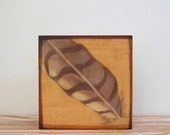Feather Art l 5x5 art block on wood Brown Beige Shabby Chic Nature Woodland Forest Red tile studio