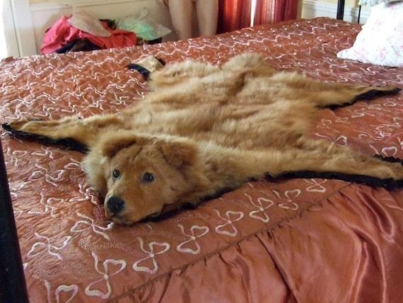Rare Vintage Taxidermy Pet Dog Rug