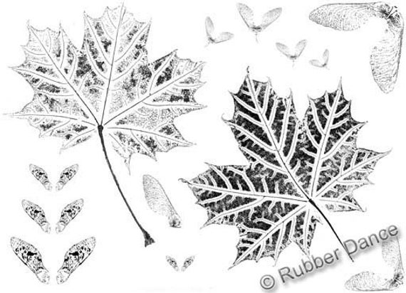 """Rubber Stamp sheet (7x5 inches). """"Major Maple"""", unmounted maple leaf stamps made from Bibi Lindahl nature print originals"""
