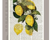 Beautiful Lemon Illustration Print on Vintage Dictionary Book page -  Kitchen decor, Botanical art, Artwork