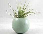 Mini Air Plant Pod - Sage // Planter (with air plant)