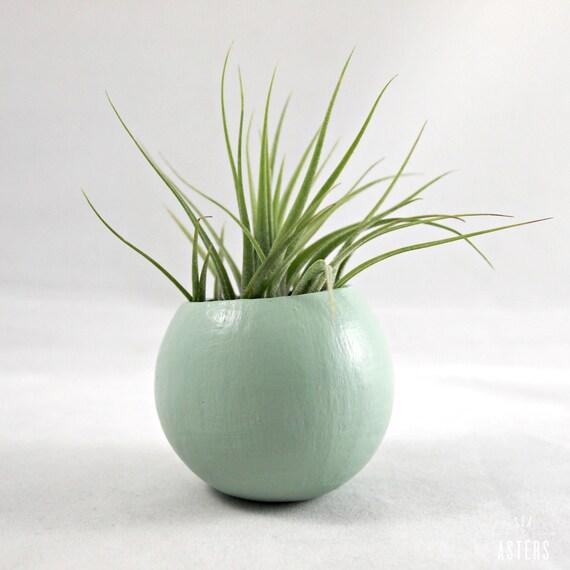 Mini Air Plant Pod - Sage // Planter (with air plant)