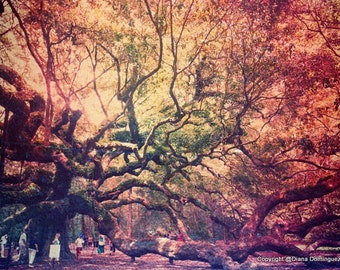 Angel Oak Tree Photography, Charleston Art, Charleston Gifts, Old Oak Tree Photo, Living Room Decor