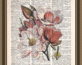 Glorious magnolia illustration printed on a vintage dictionary page.  Wall Art, Wall Decor, Home Decor.