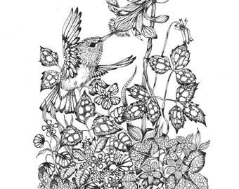 Pen and Ink - Hummingbird -  Illustration Print