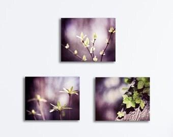 Three Canvas Print Set, dark purple green plum nature violet photography botanical photo gallery wraps 3 purple wall art modern artwork set