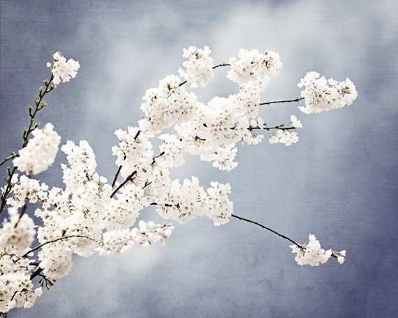 "Floral Photography - light steel blue white grey gray branches wall print flowers blossom nature branch photograph, ""Autograph of Angels"""