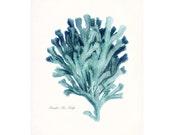 Coastal Decor Pacific Sea Kelp Natural History Giclee Art Print No. 2 8x10 tide pool