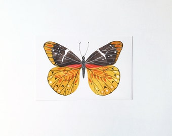 Butterfly No.3 - postcard