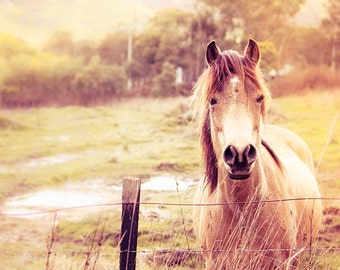 Horse photography equine pony photography fine art 8x10 8x12 nature photography fall countryside autumn photography cream vintage gold phot