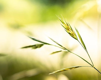botanical photography nature grass photography abstract fine art 8x10 8x12 green grass nature print autumn photography wall art green yello