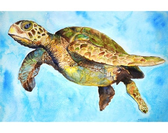 Green Sea Turtle- Giclee 8 x 12 Print