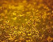 Mustard Yellow Flower Photograph, Vintage, Shabby Chic Art Print, Bathroom Art print, Yellow Autumn Fall Photograph, Saffron Mustard Fall