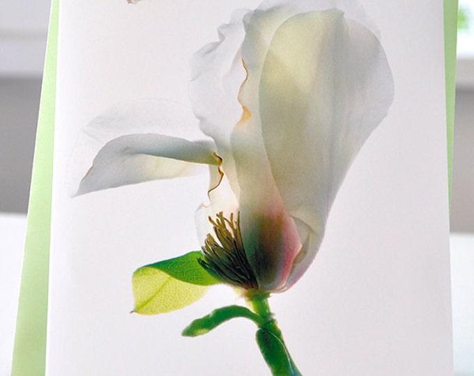 Handmade Greeting Card Woodhall Magnoli Blank free Shipping in the US