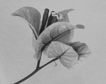 Forgotten No.1 - Black and White Macro Photography, Flower Nature Art Print, Vintage Inspired Botanical, Gray Decor
