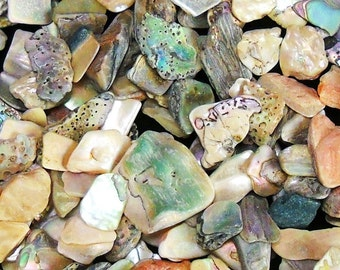 "1/4""-1"" Abalone chips iridescent paua natural sea life ocean beach nautical Hawaii seashell decor MEDIUM"