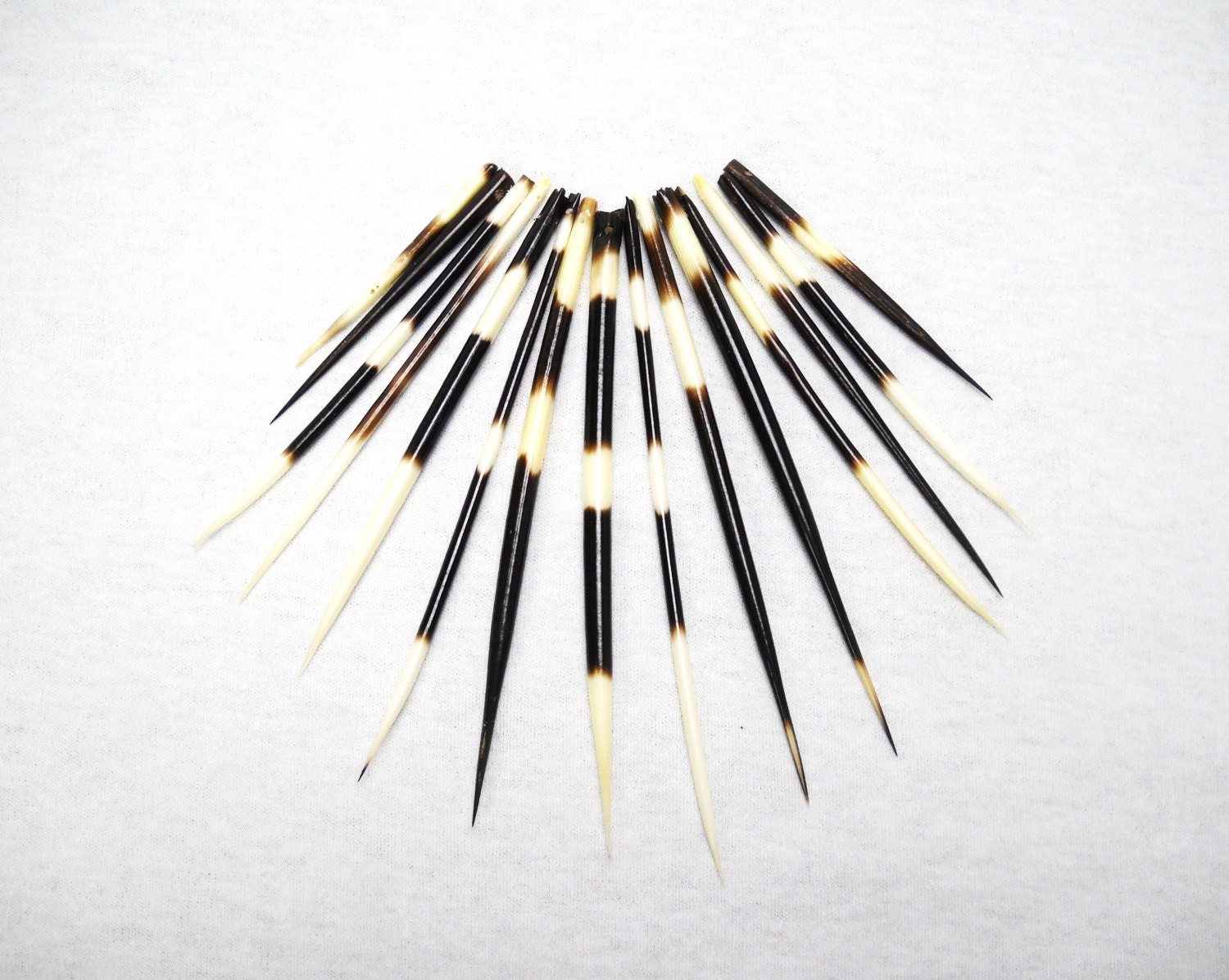 Multipack 26 DRILLED CUT Porcupine Quills Needles