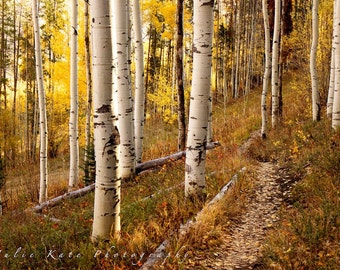 "20"" x 30"" Print on Canvas, Photo of Aspen Trees in Colorado, Fall Leaves, Fine Art Print - ""Hiker's Paradise"""