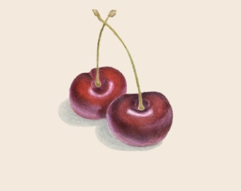 Cherries Drawing print