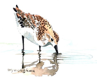 ACEO Limited Edition- A sandpiper, in watercolor