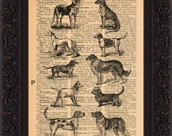 Collection of Dogs on repurposed 1930's Spanish encyclopaedia Page  mixed media digital print art