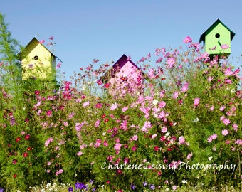 Fine Art Photography, Note cards, Gift for her, children's room,  Decor, Birdhouses, Flowers, Pink, Green, Purple,  Cottage,  Whimsical,