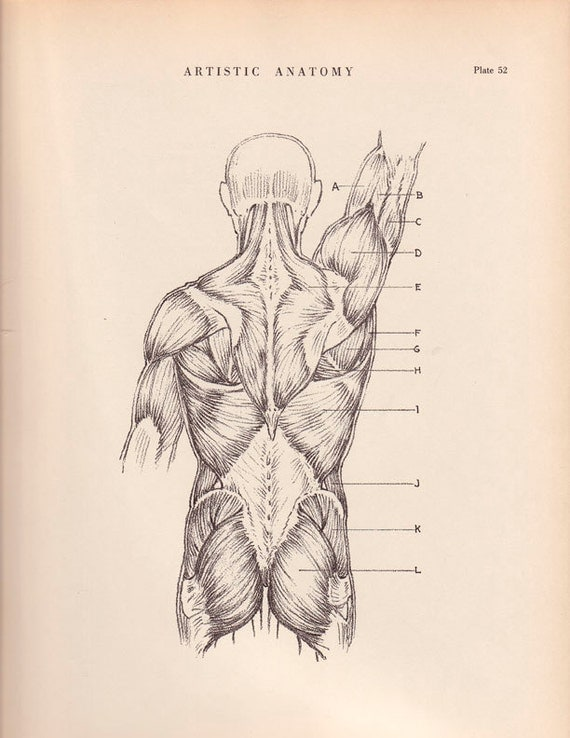Human Back Muscles Print 9 X 12 Anatomy Drawing By AgedPage