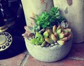 Tony the grey Succulent arrangement