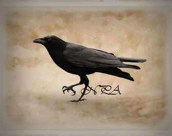 Rustic Crow Black Bird Neutral Country Home Decor Farmhouse Matted Picture A491