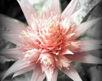 Pink Succulent 4