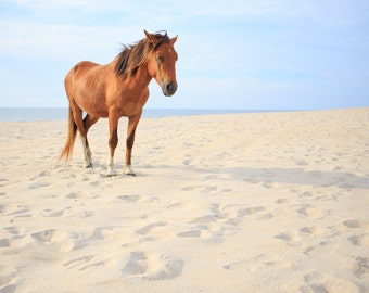 Assateague Pony - Horse Photography - Beach Photography - Seascape - Equine - Blue, Cerulean - Assateague Island - Wild Horse Photography