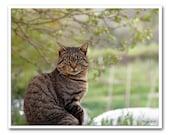 Grey cat portrait - cat photography print