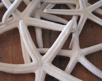 "Mini White Starfish (12) - 2 1/2"" to 4"" Starfish - Seashells - Seashell Supply - Starfish - Coastal Home Decor"