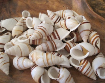 Beach Decor - White With Brown Stripe Tree Snail Shells (12) - Hel Partuloides Shells - Nautical Decor - Craft Shells